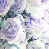 Avatar of flowers_101