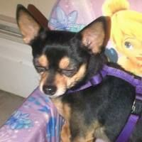 dog_loverlesley