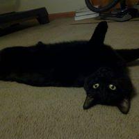 meow_meow_cats