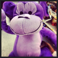 wild_teddy